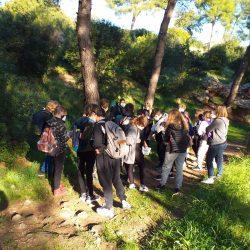 4-observation en forêt
